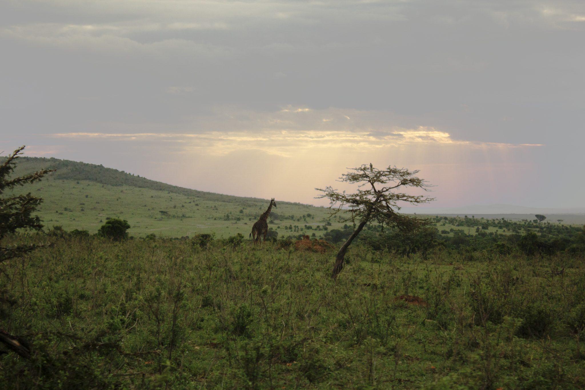 Maasai Maran kansallispuisto, Maasai mara Kenia, Maasai mara national reserve, maasai mara national reserve kenya